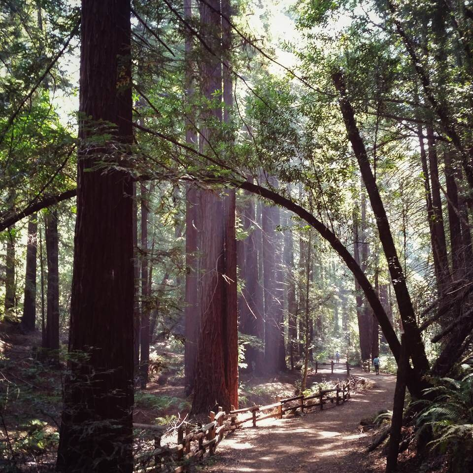 Hiking French Loop Trail in the Oakland redwoods on one of the best hikes near San Francisco.