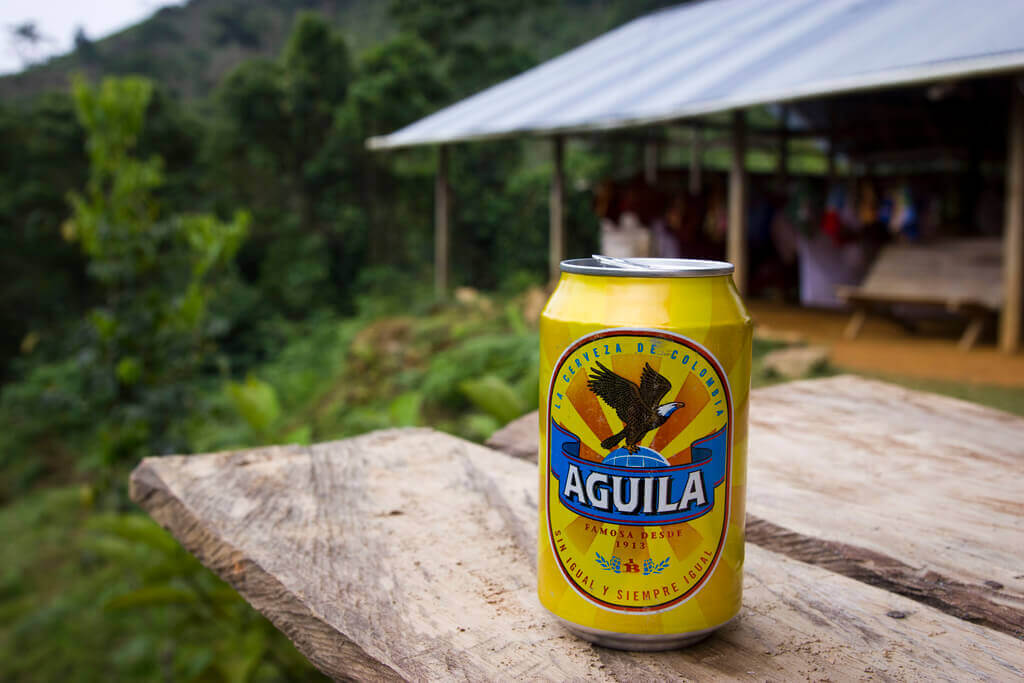 Aguila in Minca, Colombia.