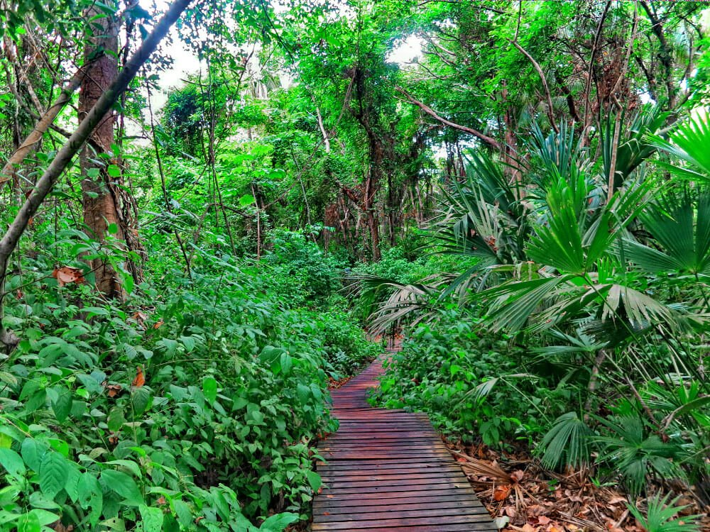 The hike to Parque Tayrona, Colombia through the jungle.