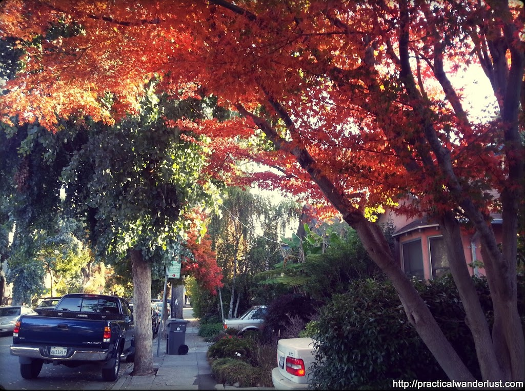 Multicolored trees lining the street in Rockridge, Oakland, in the San Francisco Bay Area.