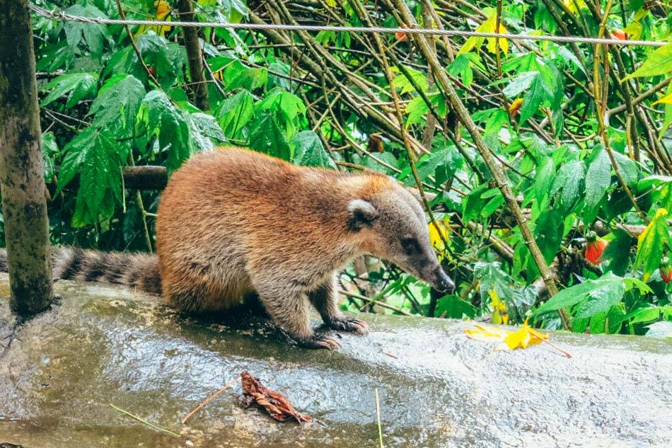 Animals along the Valle de Cocora hike