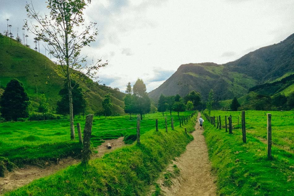 The last strecth of our Valle de Cocora hike in Salento