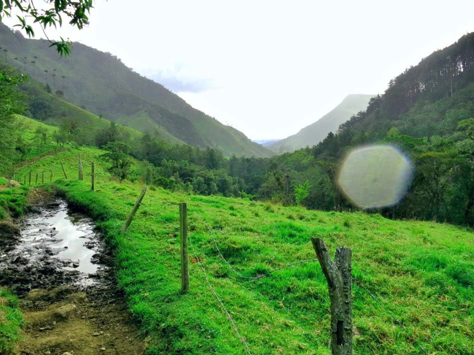 Travel to Cocora Valley in Salento