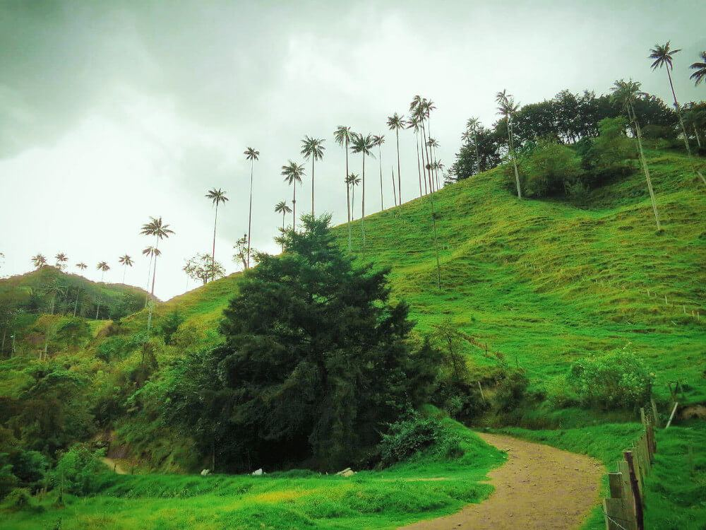 Just before sunset, hiking the foggy, misty Valle de Cocora in Salento, Colombia.