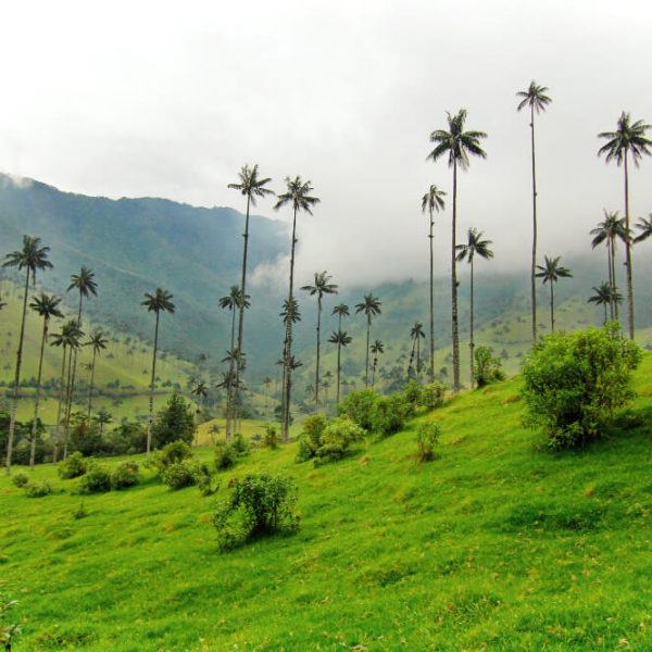 The Valle de Cocora hike is as beautiful as it is treacherous. Know what to expect before you hike the Valle de Cocora hike in Salento, Colombia.