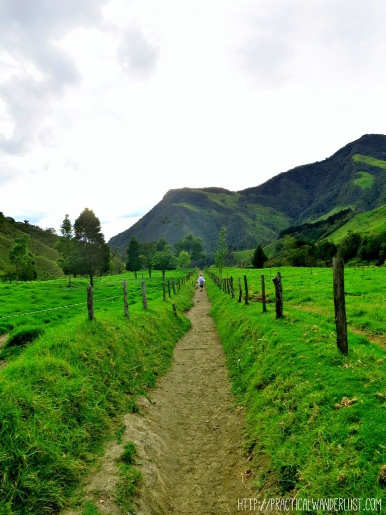 Stunning scenery on the Valle de Cocora hike in Salento, Colombia.