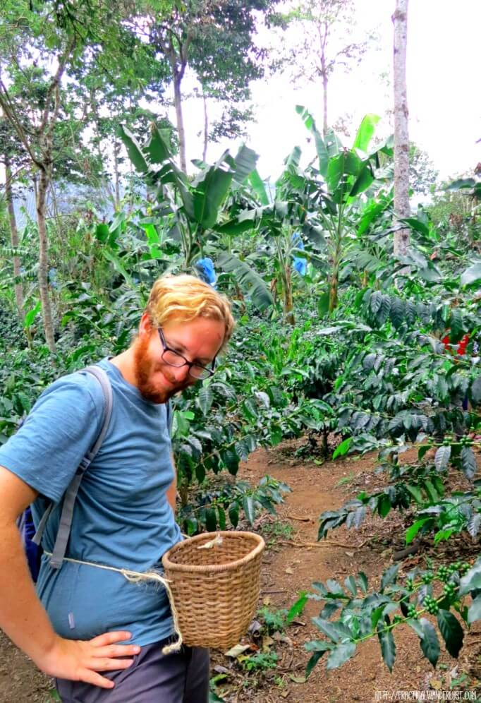 Picking coffee on a Colombia coffee farm tour in Salento, Colombia.