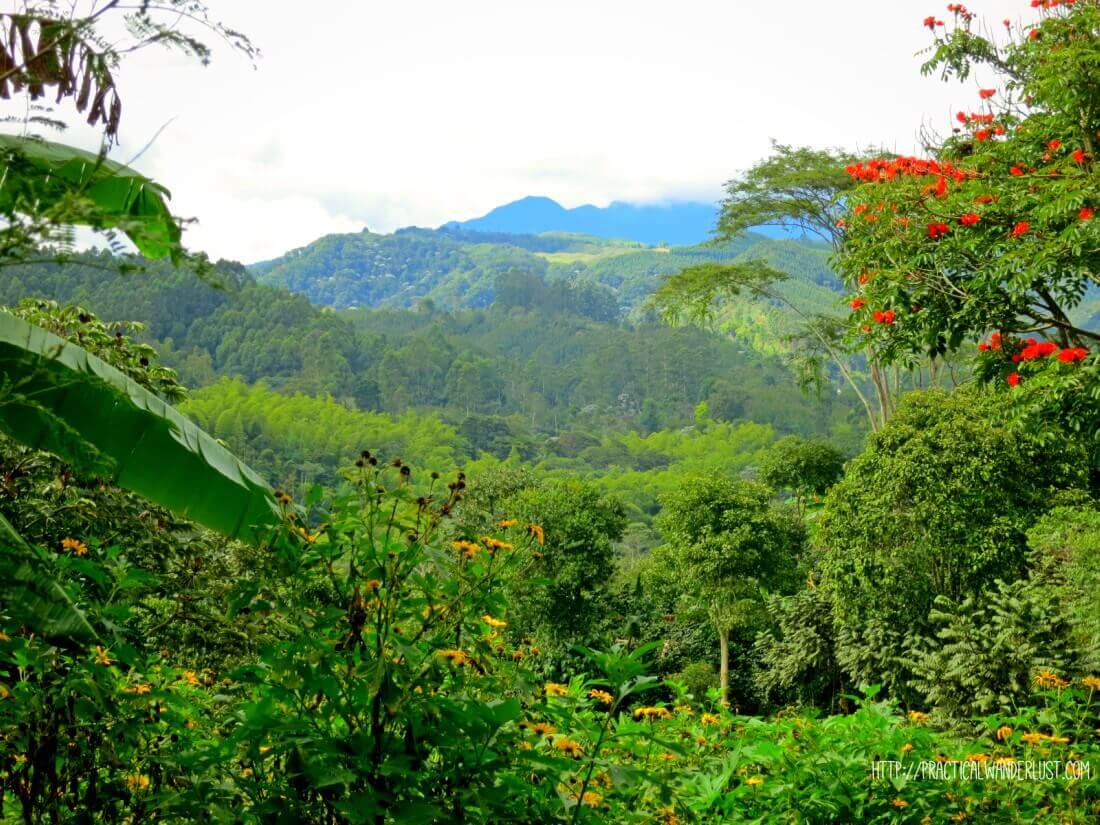 The stunning view of Salento Coffee Farms in the Eje Cafetero, Colombia on our walk from La Serrana hostel to Finca el Ocaso to do a coffee farm tour!