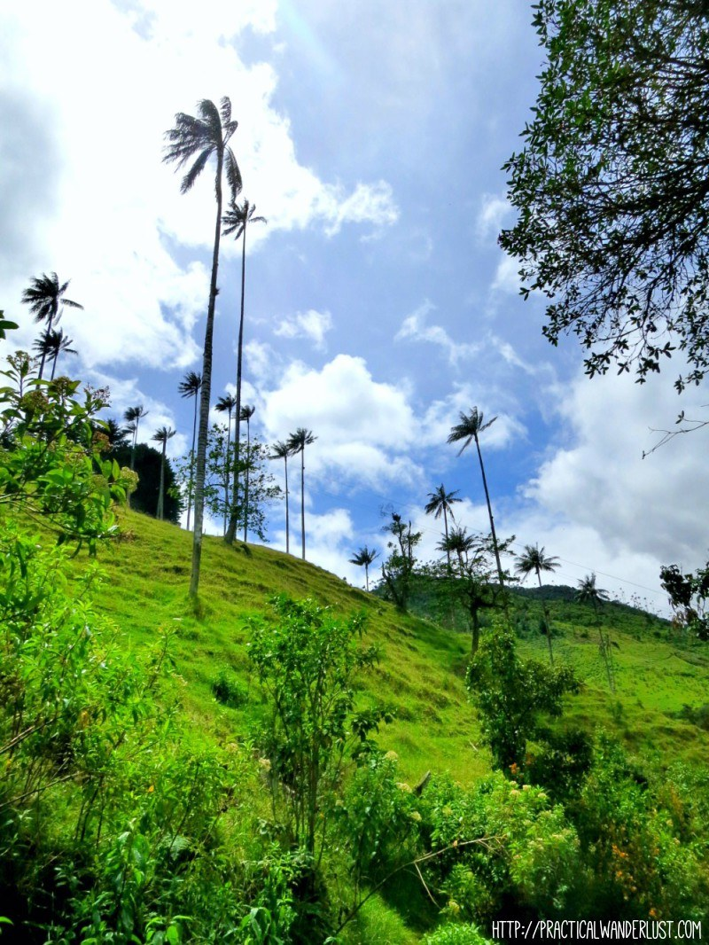 Stunning views of the bright green mountains and crazy high wax palm trees on the Valle de Cocora hike in Salento, Colombia.