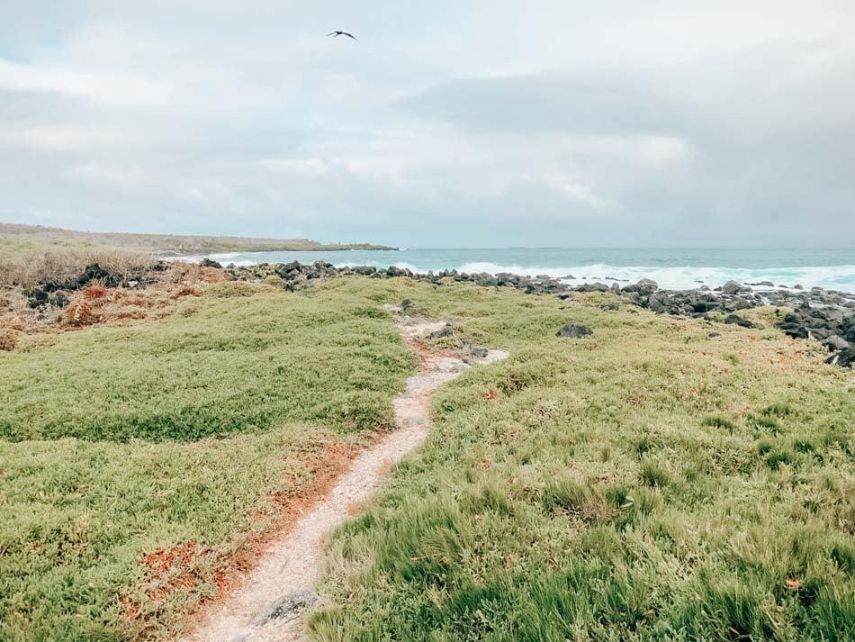 Beach path on Santa Cruz Island, Galapagos, Ecuador.