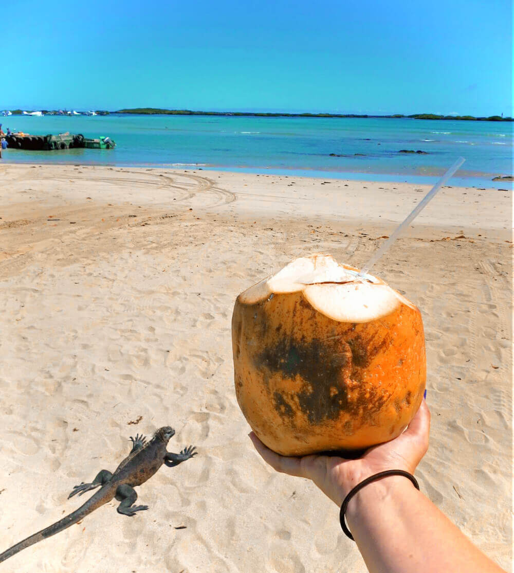 Sipping a fresh coconut with a super chill iguana by the docks on Isabela Island in the Galapagos! We spent a week backpacking the Galapagos Islands.