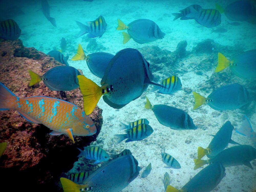 Snorkeling in the Galapagos Islands, Ecuador.