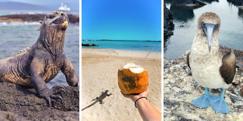 South Island Trip Planner