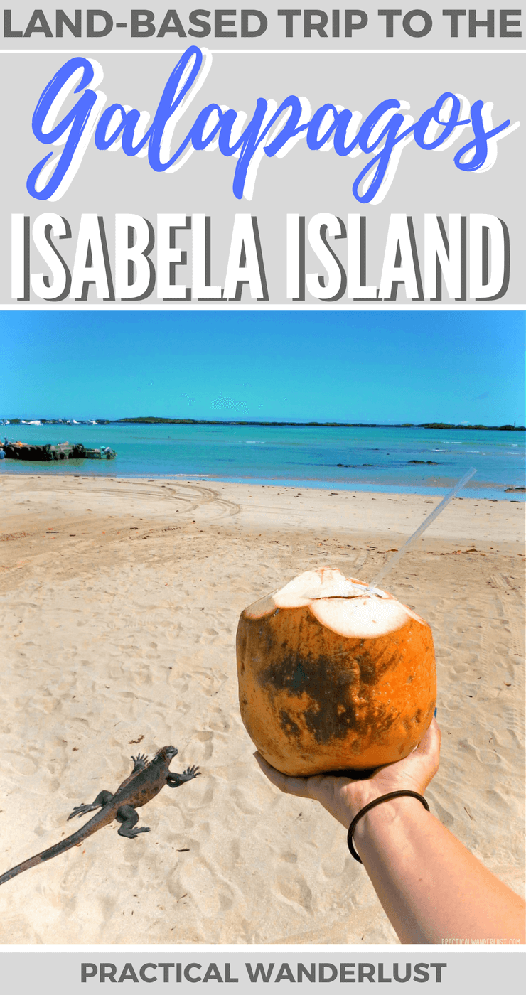 The Galapagos Islands in Ecuador are a must-see for any wildlife lover. Find out why we stayed on Isabela Island during our week long land-based trip to the Galapagos Islands. Don't miss Isabela Island when you backpack the Galapagos Islands!