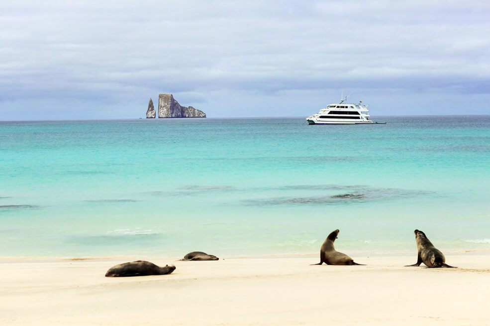 Sea Lions on the beach in San Cristobal in the Galapagos Islands, Ecuador.