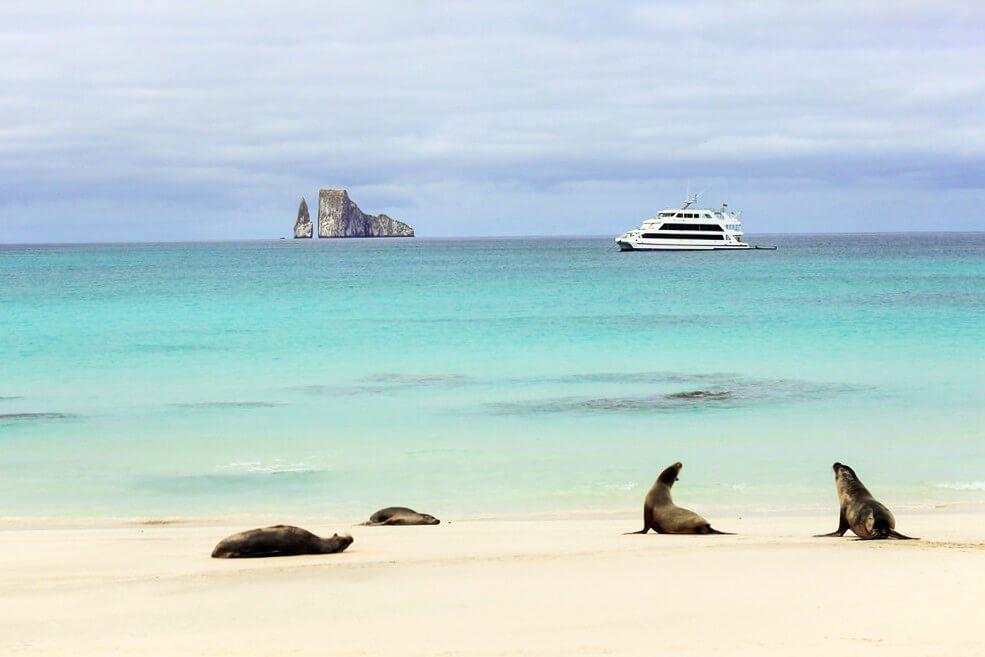 Sea Lions on the beach in San Cristobal in the Galapagos Islands, Ecuador.
