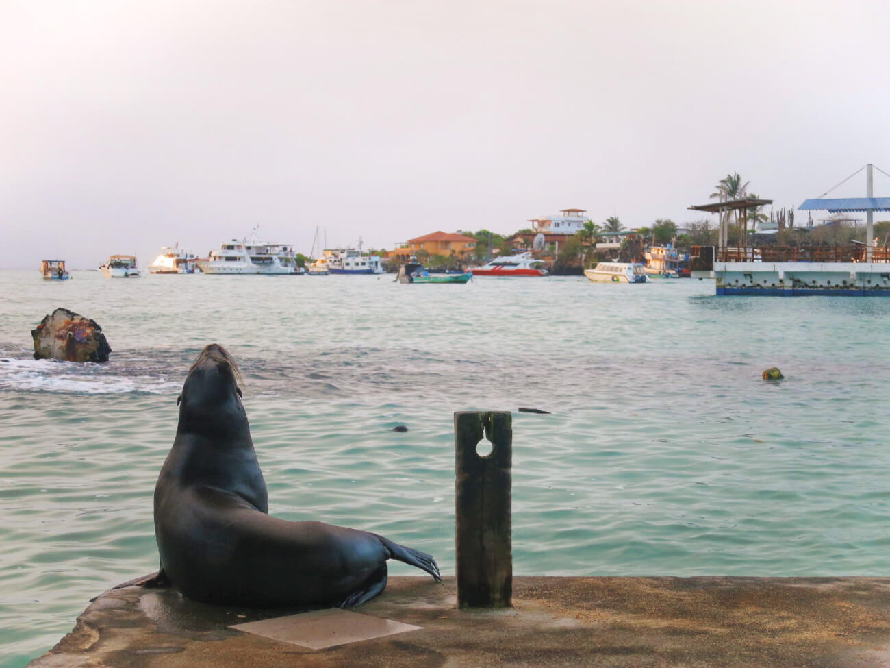 Good morning, Santa Cruz! This little cutie was there to greet us at the Puerto Ayora docks and entertained us while we waited for our ferry to Isabela Island. The best part of waking up early in the Galapagos Islands!