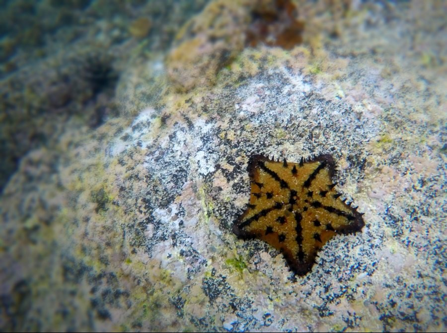 starfish on the Los Tintoreras tour near Isla Isabela