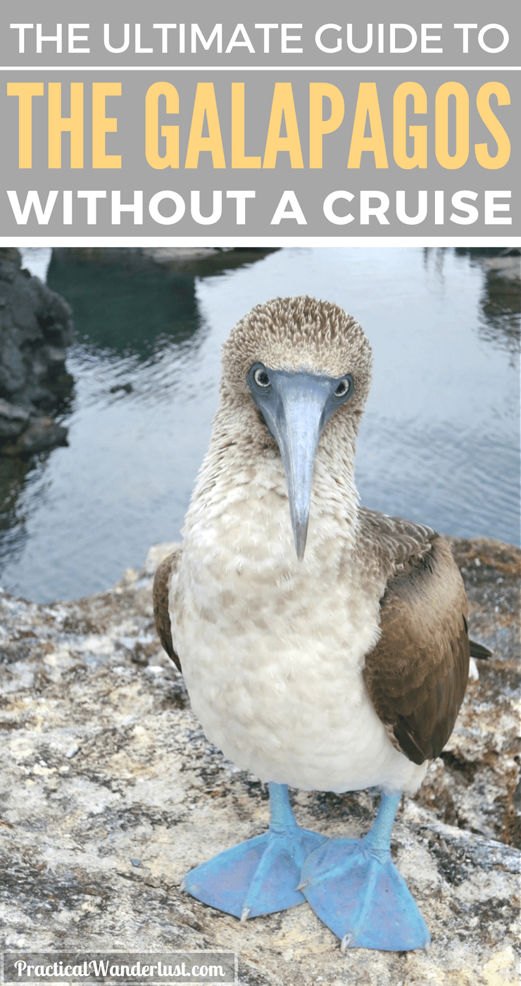 You don't need a cruise to visit the Galapagos Islands. Save a ton of money with this budget-friendly alternative! for Galapagos Islands travel!