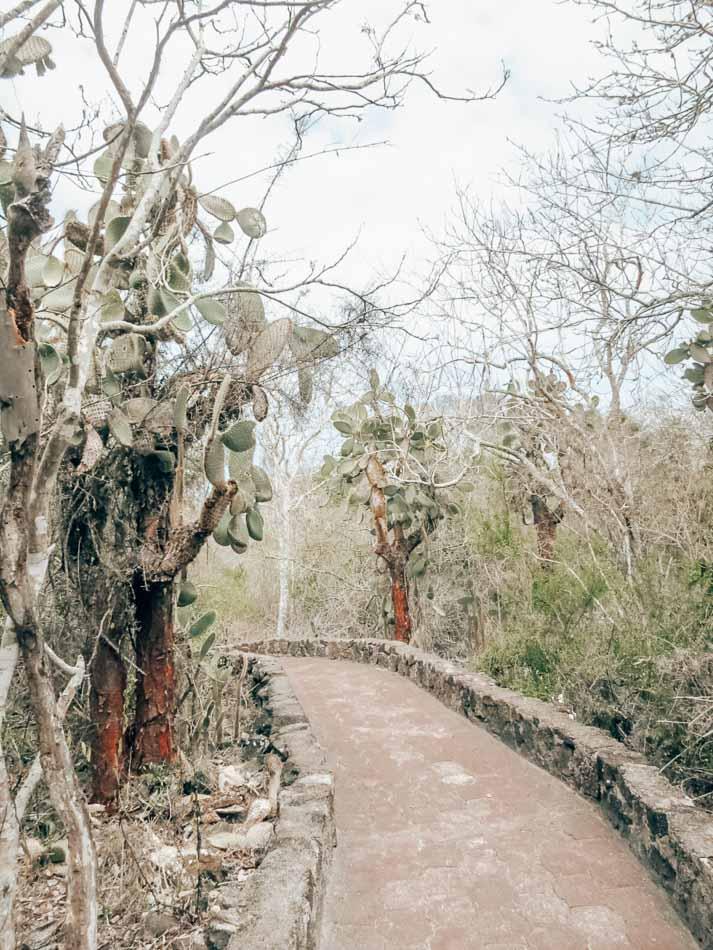 Path to Tortuga Bay, Santa Cruz Islands, Galapagos, Ecuador.