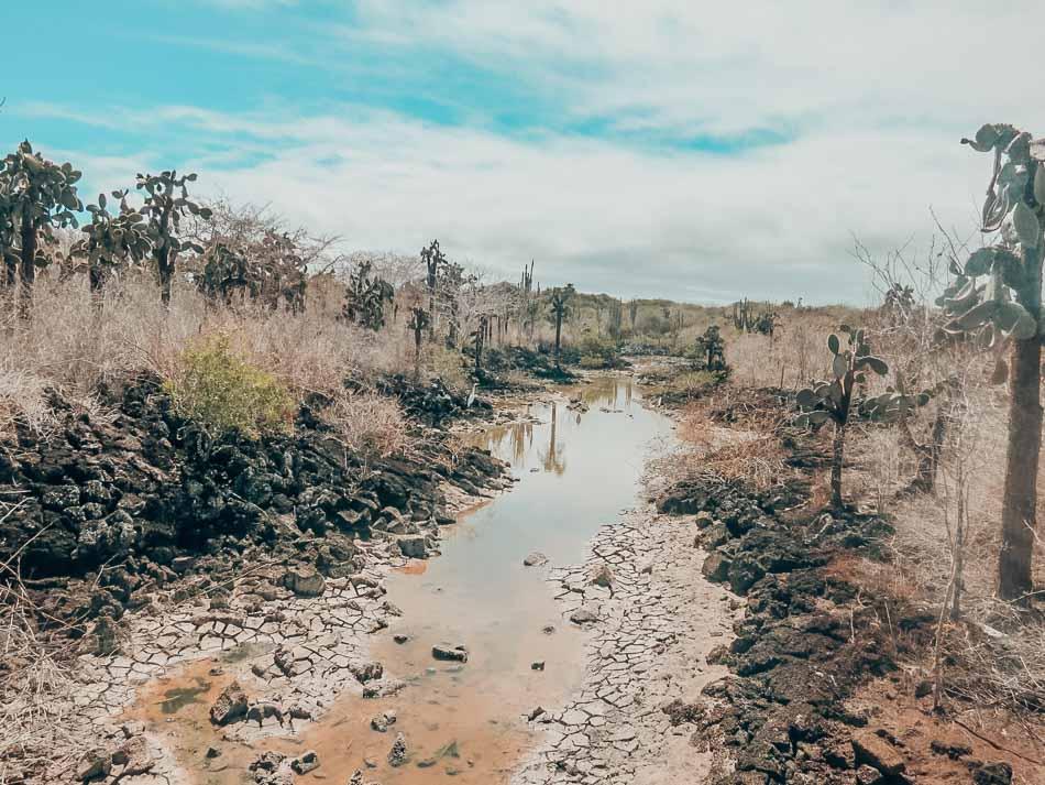 View on the walk to Las Grietas on Santa Cruz Island, Galapagos, Ecuador.
