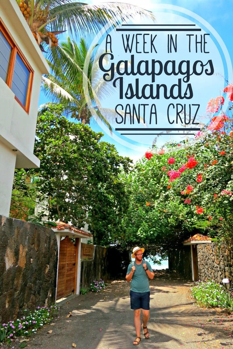 Visit the Galapagos Islands on a budget with a land-based trip! We spent a week in the Galapagos Islands, Ecuador and it was amazing. Read about our visit to Puerto Ayora on Santa Cruz Island.