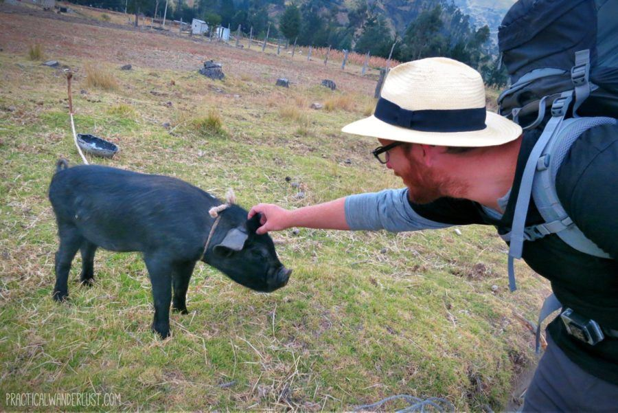 Making a pig friend on the Quilotoa Loop in Ecuador.