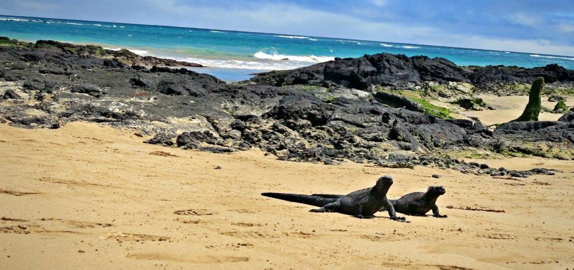 How to Visit The Galapagos Islands Without a Cruise: A Complete Guide