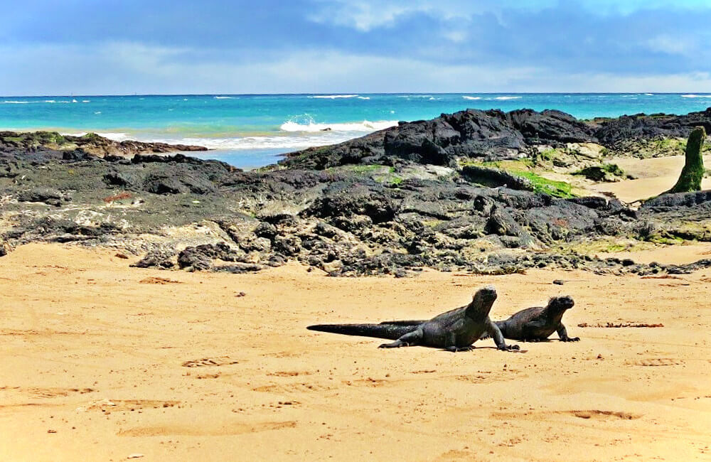 A pair of marine iguanas outside our hostel on Isabela Island in the Galapagos, Ecuador.