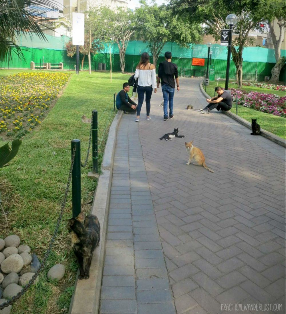 The Kennedy Park cats have lots of friends and admirers in Lima, Peru!
