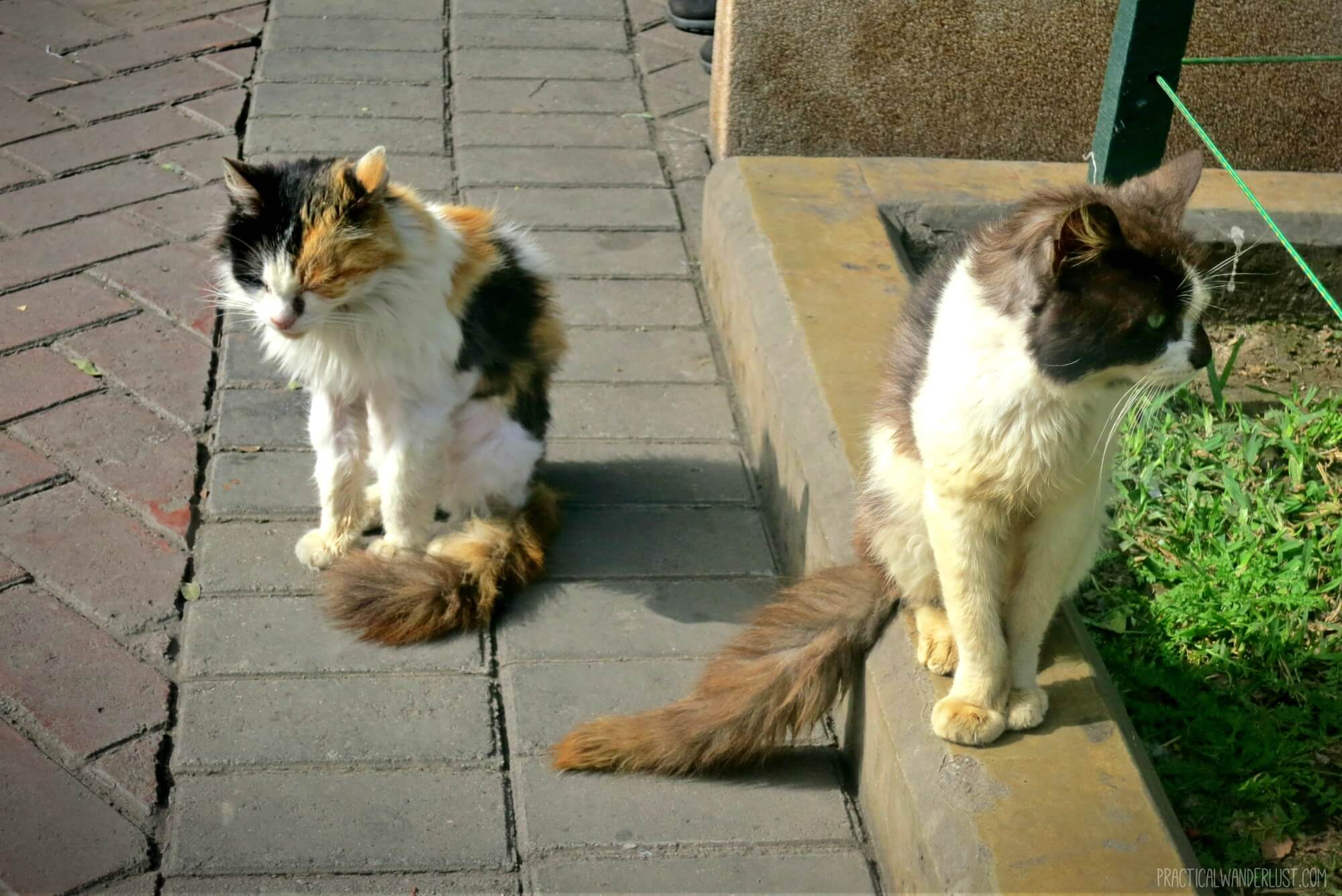 Two of the fluffiest Kennedy Park cats in Lima, Peru!
