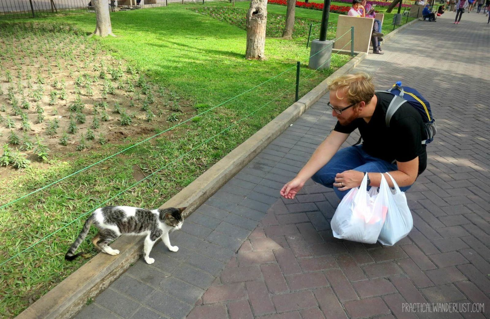 Making a cat friend at Kennedy Park! The Kennedy Park cats are friendly and many of them love to make new friends. Kennedy Park is in Lima, Peru