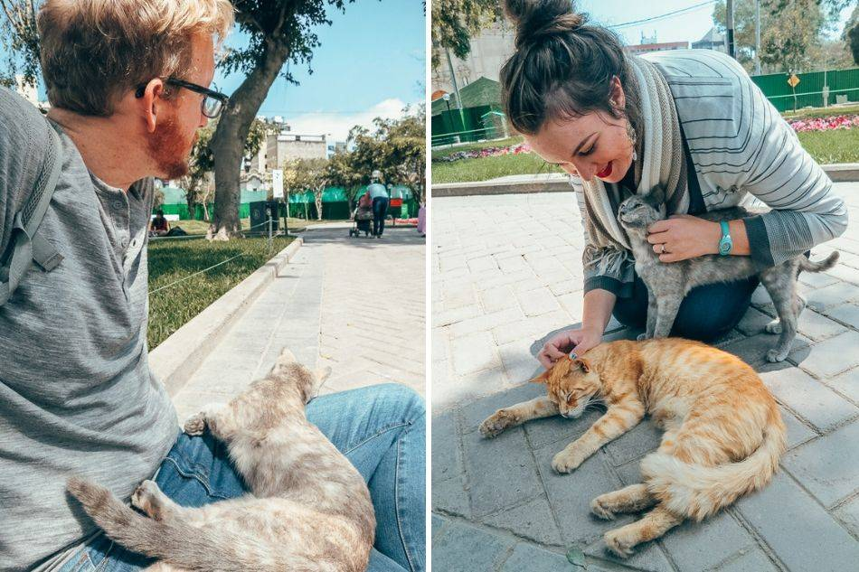 Playing with the cats at Parque Kennedy