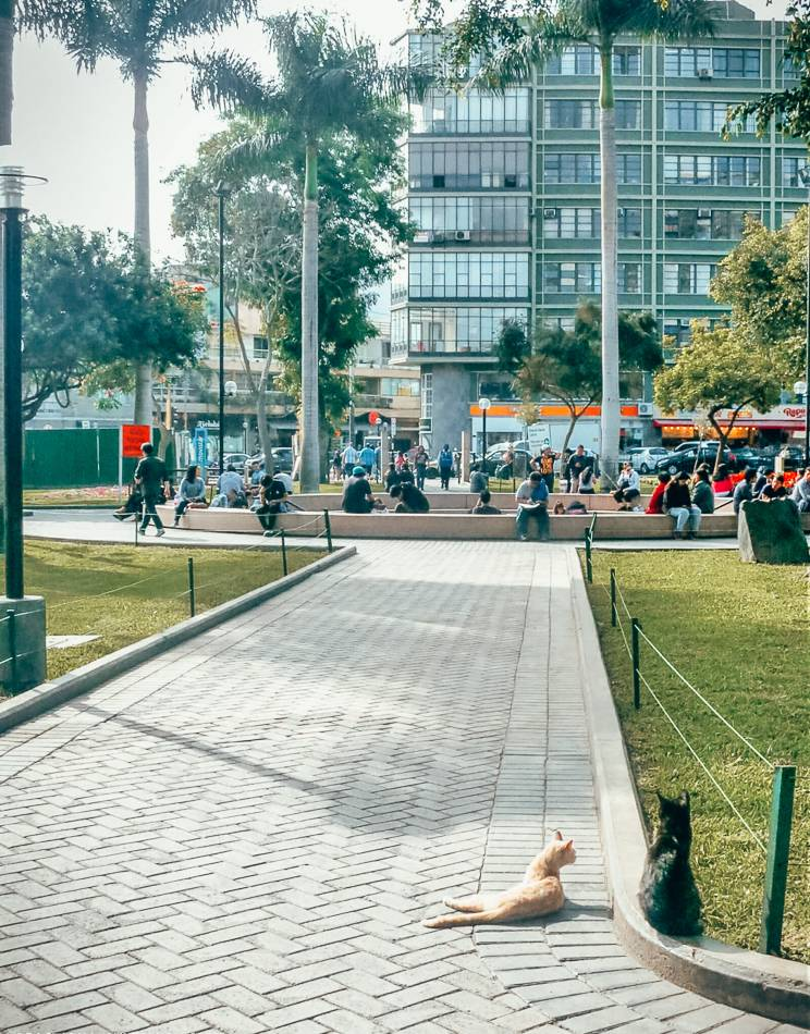 Parque Kennedy is one of the best parks in Lima