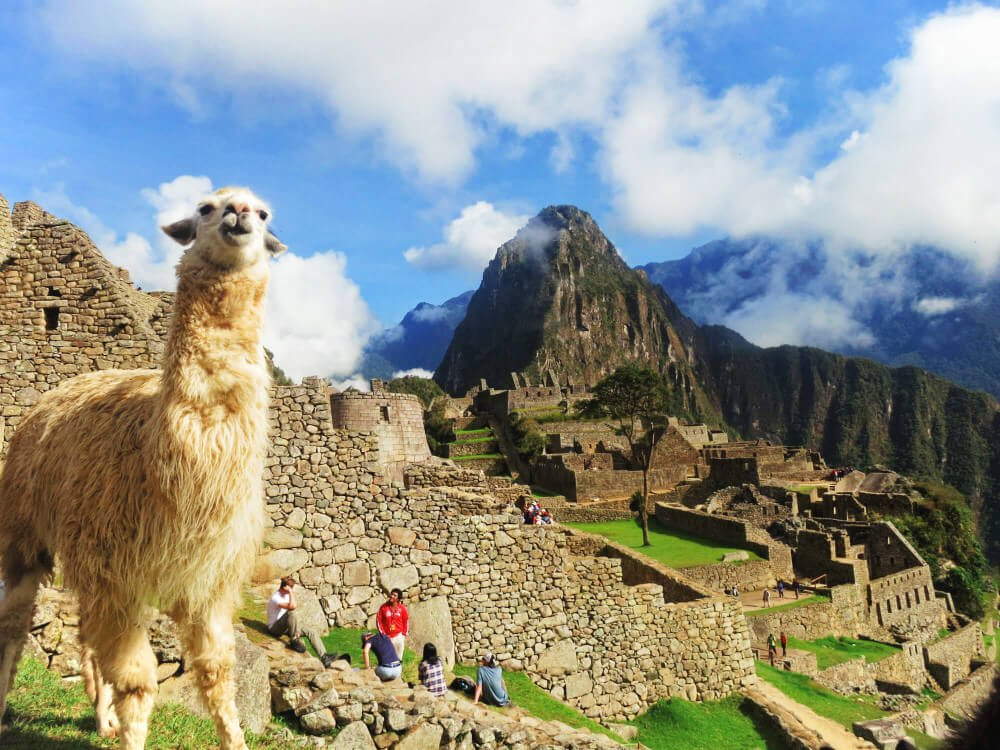 Llama at Machu Picchu, Peru after our Inca Trail failure.