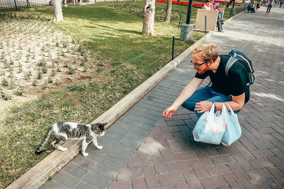 Making a cat friend at Parque Kennedy in Miraflores! The cats are friendly and many of them love to make new friends.