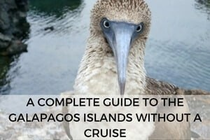A Complete Guide to the Galapagos Islands Without a Cruise