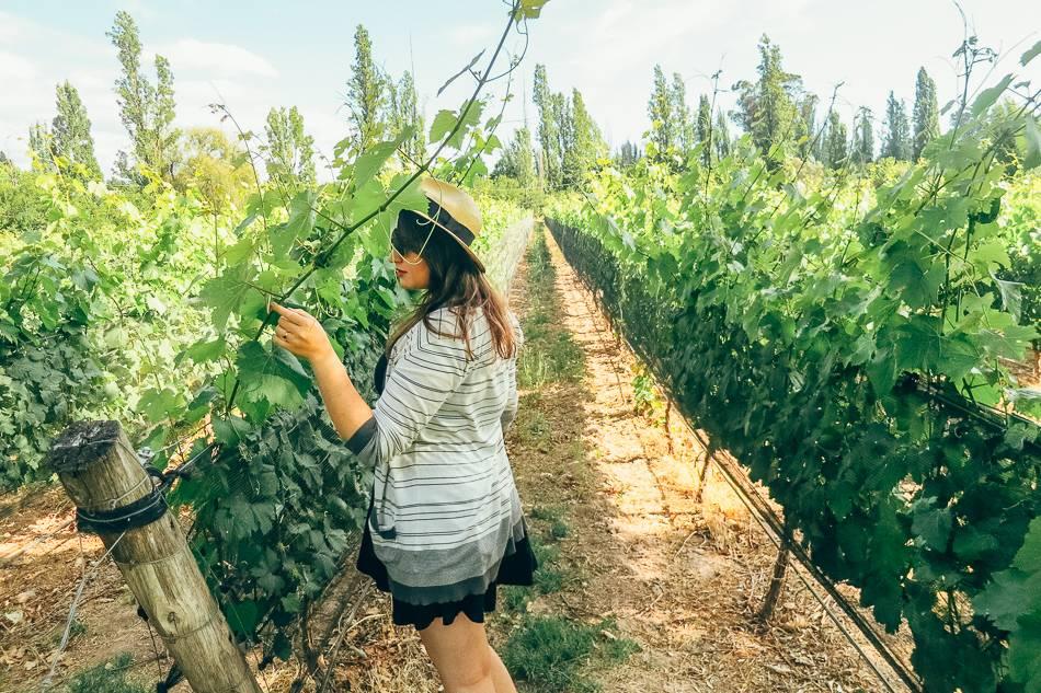 Clos de Chacras winery in Mendoza, Argentina