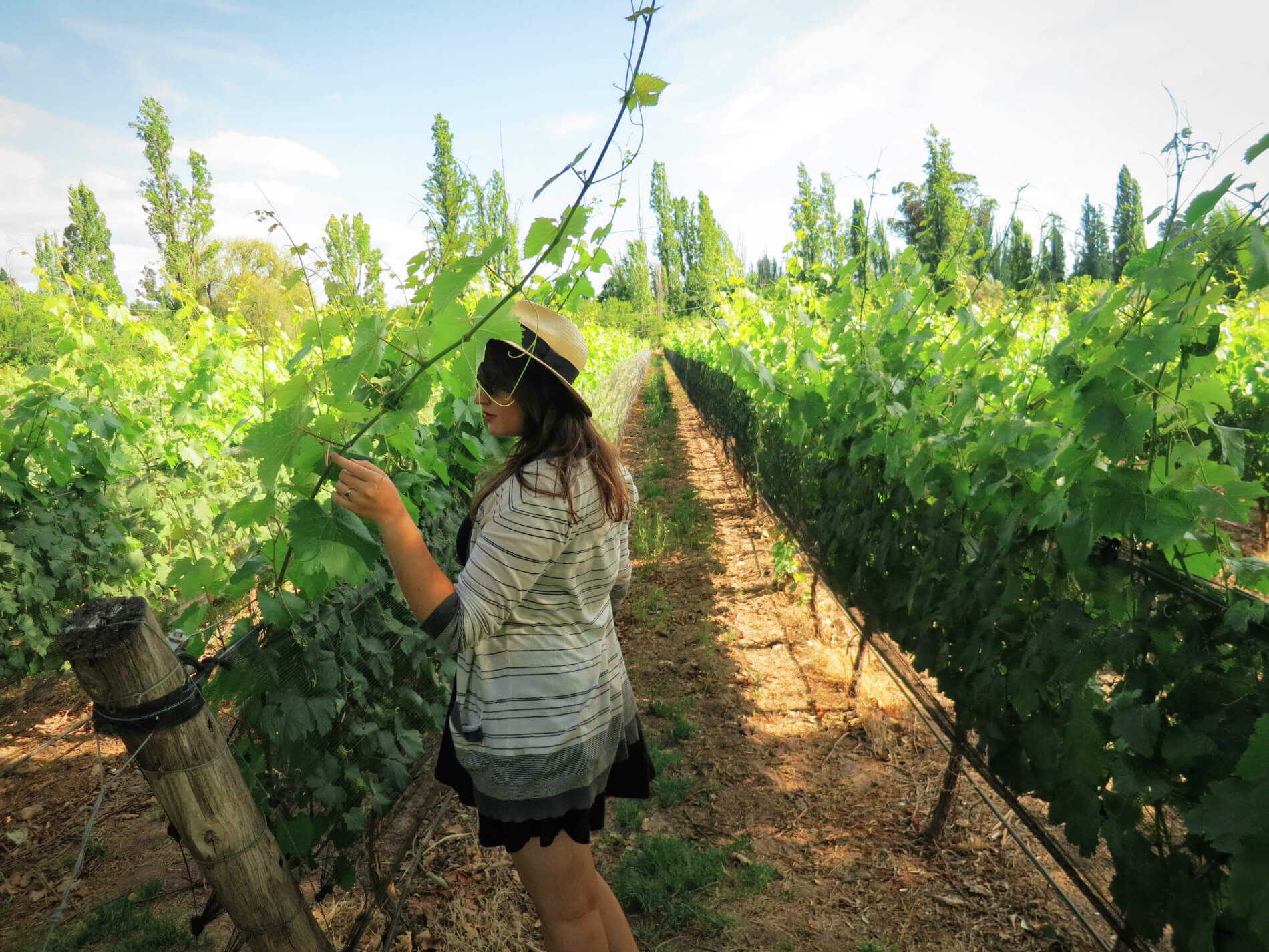 Vineyards in Mendoza, Argentina. Part of a winery tasting tour with Mendoza Wine Camp.
