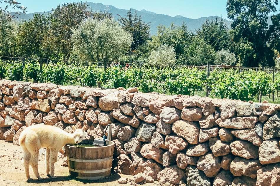 Emiliana Winery near Valparaiso, Chile