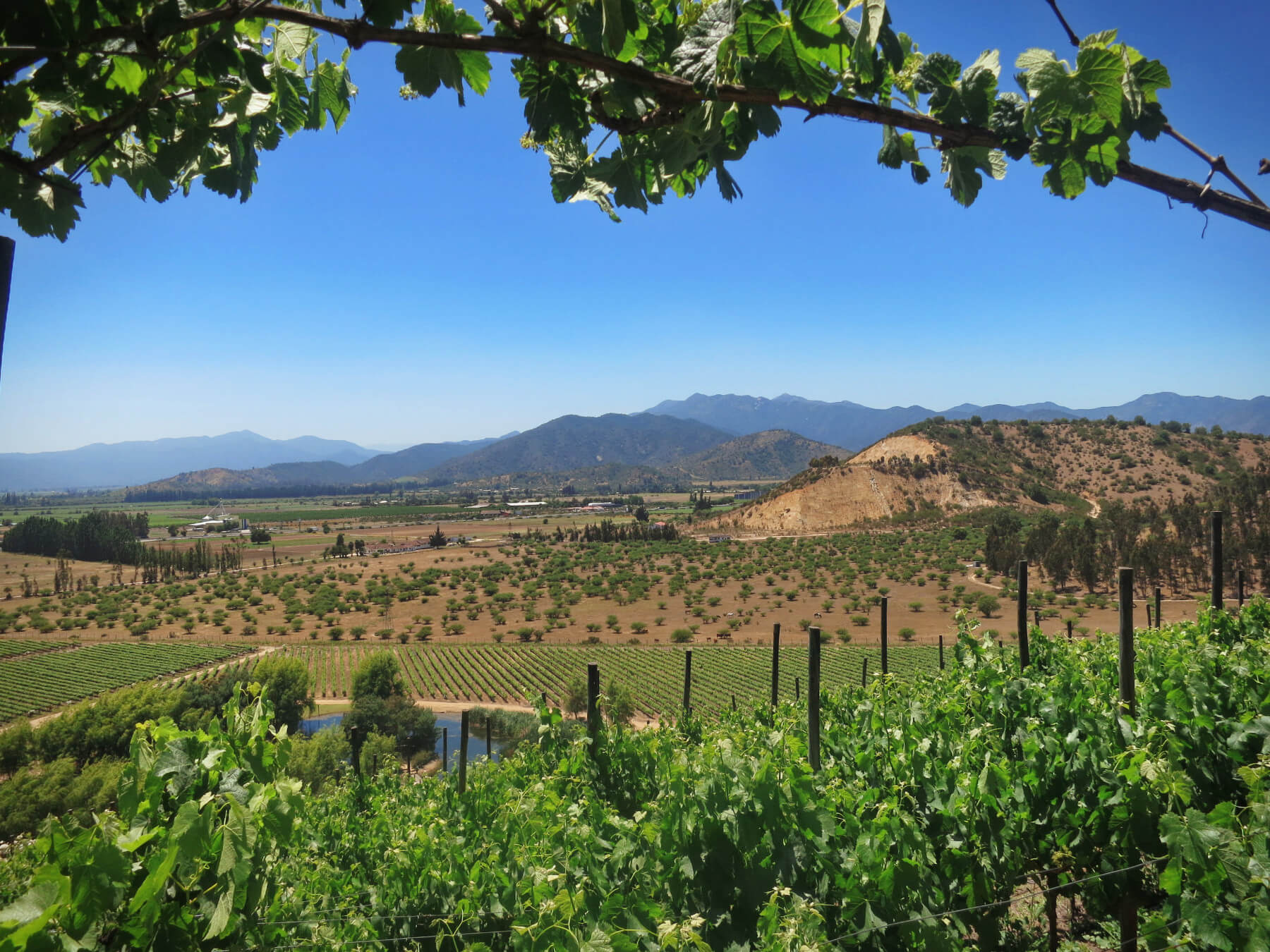 A sweeping view of the Casablanca Wine region, the best place to go wine tasting in Valparaiso, Chile! Wine tasting in Chile can be budget-friendly when you do it without a tour!