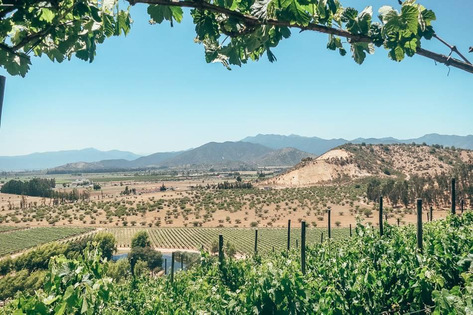 Vineyards at Casablanca Valley near Valparaiso