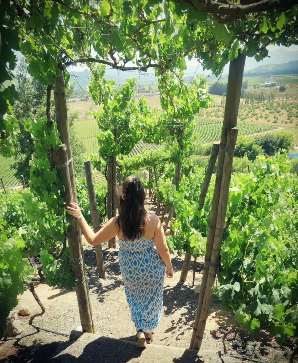 Exploring the vineyards at Indomita during our budget-friendly day of wine tasting in Valparaiso, Chile without a tour!