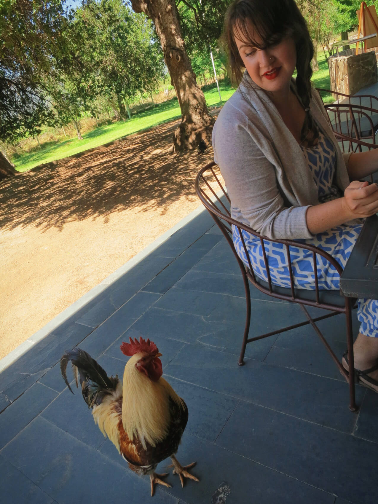 A resident chicken at Emiliana Organic Vineyards stopping to say hello while wine tasting in Valparaiso, Chile!