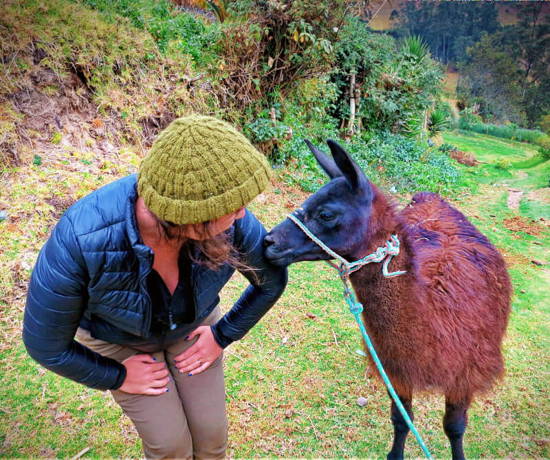 Tito the Llama at Llullu Llama hostel in Insinlivi on the Quilotoa Loop in Ecuador.