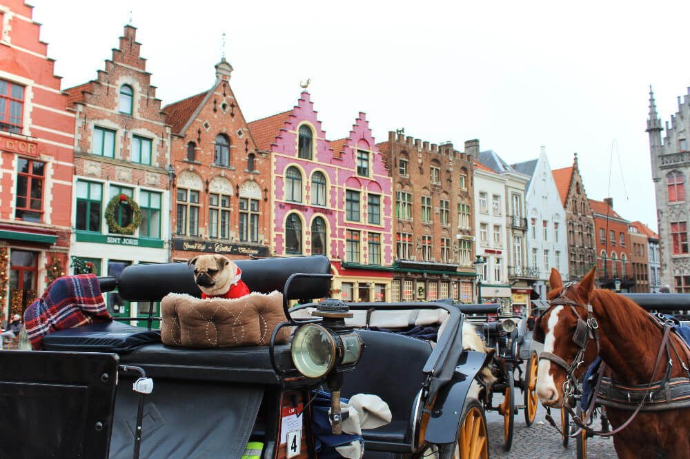 Horse drawn carriages and a little pug puppy wearing a Santa outfit in Brugges, Belgium during the winter.