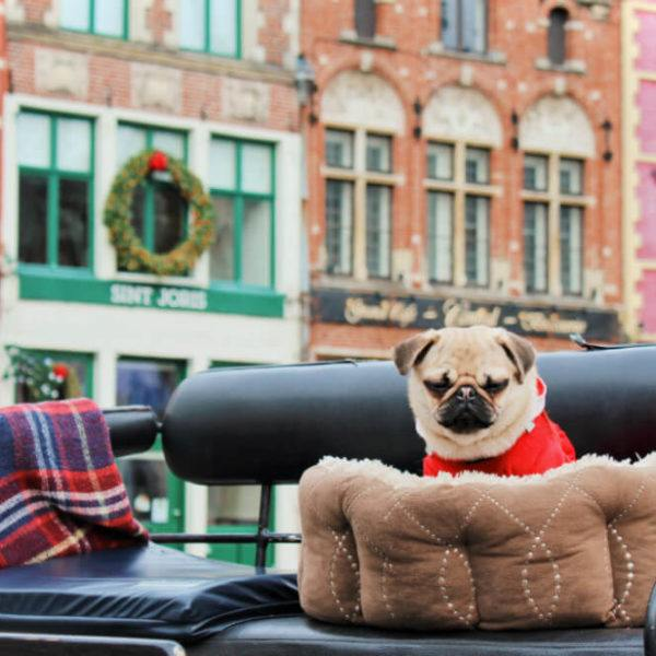 Romantic things to do in Bruges, Belgium! Celebrate Christmas in Bruges!