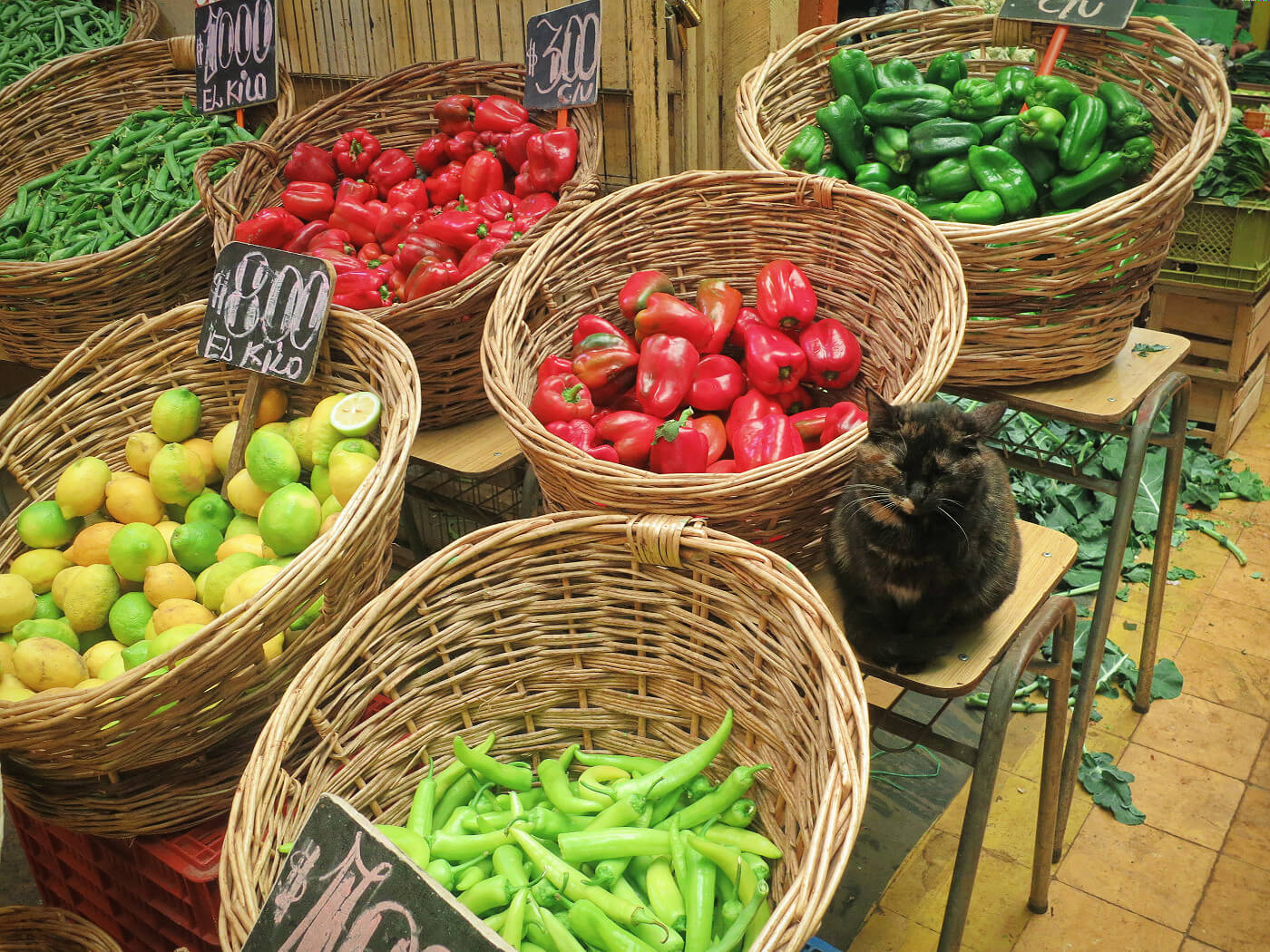 Cat in a mercado stall in Valparaiso, Chile.
