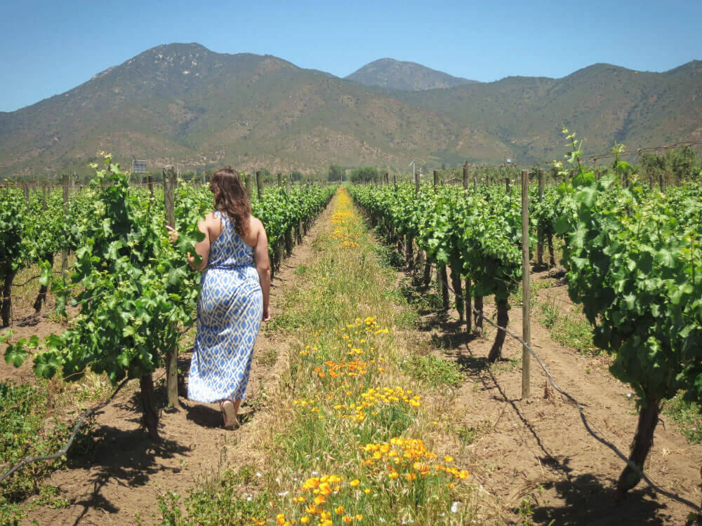 The Casablanca Wine Region near Valparaiso, Chile.