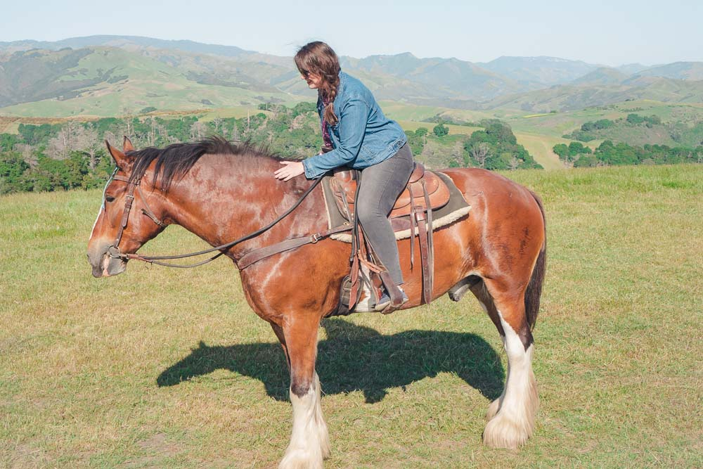 Riding a massive Clydesdale horse in Cambria, California at Covell's Clydesdale Ranch.